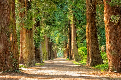 Photo credit: https://pixabay.com/photos/avenue-trees-away-walk-green-2215317/