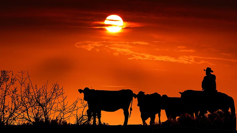 Photo+credit%3A+https%3A%2F%2Fwww.pikrepo.com%2Fnfnin%2Fsilhouette-of-cows-on-grass-field-during-sunset