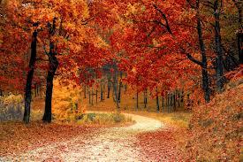 Photo credit: https://pixabay.com/photos/fall-autumn-red-season-woods-1072821/
