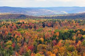 Photo credit: https://commons.wikimedia.org/wiki/File:Vermont_fall_foliage_hogback_mountain.JPG
